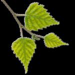 Logo Naturheilpraxis Bottmingen